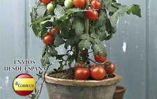 Semillas de tomate para tomateras en maceta - Pack 10 semillas