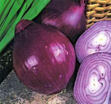 Vegetal Cebolla Rojo BRUNSWICK 25g aprox 6,250 Semillas A GRANEL