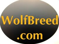 Wolfbreed.com - PREMIUM PET DOG BUSINESS - .com Website Domain Name For Sale