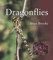 Dragonflies [Smithsonian's Natural World Series] by Brooks, Steve , Paperback