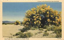 Willard Linen Postcard; Palo Verde Trees Blooming in Desert Wash Palm Springs CA