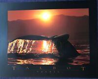Soleil by Bob Talbot (Colour Art Photography, 78.5cm x 61cm)