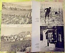1962 Arcachon Parc à Huîtres,Roquefort ,Menton culture des oeillets; vignobles