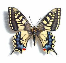 Schmetterlings- und sonstige Insekten-Sammlerobjekte