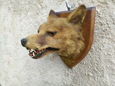 Taxidermy Vintage Fox Mask tattoo rare skull antique curiosity natural history