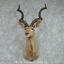 #13606 N+ | African Greater Kudu Shoulder Head Mount
