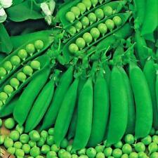 Pea Waverex Petite Pois Type Appx 500 Seeds Vegetable