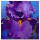 Simon Bull HAND SIGNED Limited Edition Iris Dancer Canvas UK/US artist