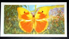Cuban Yellow Butterfly    Caribbean Butterfly  Vintage Colour Card # VGC
