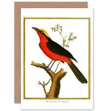 Bird Pie Grieche Du Senegal Shrike Greetings Card With Envelope