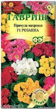 Primula Double Primrose terry seeds F1 Mix Tm Gavrish 5 seeds S1069