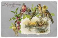 "Vintage Postcard ""A Merry Christmas to you"" Birds in Holly, Embossed."