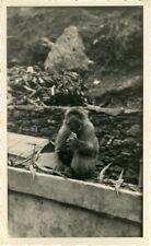 """""""GUENON et son rejeton au Camp des Chênes Algérie 1948"""" Photo originale"""