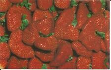 ag(F) Plant City, FL: Florida Strawberry Festival
