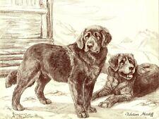 1930s Antique Tibetan Mastiff Dog Print Nina Scott Langley Dog Art 3513-E