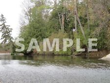 Natural Tree Forest River Water Pond Digital Photo Image Picture Graphic Design