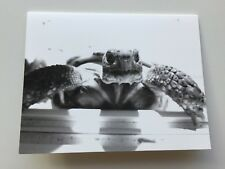 animal Happy Birthday Turtle Tortoise Greeting Card and Envelope / funny message