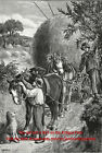 Veterinary History, Holistic Fly Repellant for Horses, Large 1890s Antique Print