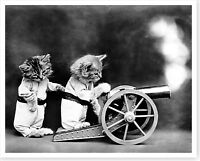 1914 Kittens Cats Firing Cannon Harry Whittier Frees Silver Halide Photo