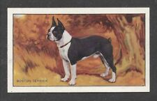 1936 UK Dog Art Full Body Portrait Gallaher Cigarette Card BOSTON TERRIER