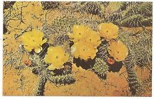 Prickly Pear Cactus,Vintage Unused Postcard (Style 2)