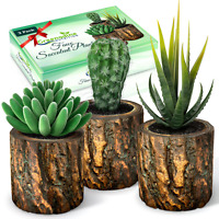 Artificial Succulent Plants Potted & Fake Cactus - Set of 3 | Fake Succulents