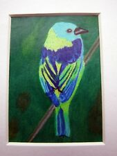 ACEO Green Headed Tanager Bird Original Coloured Pencil Mounted Wildlife Drawing
