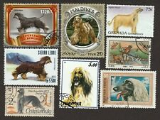 Afghan Hound * Int'l Dog Postage Stamp Art Collection *Great Gift Idea*