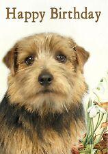 Norfolk Norwich Terrier Dog Design A6 Textured Birthday Card BDNORFOLK-1