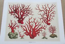 Natural History -Precious Corals 15x12 Offset Lithograph Unsigned