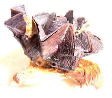 Coquillage,Lopha Crête de Coq, A l'unité, 15 à 20cm,Déco,mer,Aquarium,coquillage