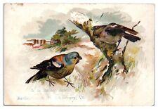 Birds, Palace Organs, AL Bailey, St. Johnsbury, VT Victorian Trade Card *VT19