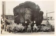 RPPC FORT BRAGG, CA Giant Tree Stump c1950s Eastman's Studio Photo Postcard