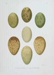 Naumann, Johann Friedrich, antique egg print
