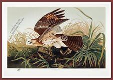 Red Shouldered Hawk by M. Bernard Loates