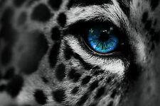 Framed Print - Vibrant Blue Eye Black & White Leopard (Picture Tiger Animal Art)