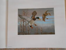 OH2 - Ohio State Duck, Numbered, Artist Signed.  Print. With Stamp.  #02 OH2