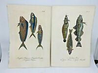 Original Antique Hand Colored Fish Print Lacepede1840 Plates 51 & 63 Cuvier