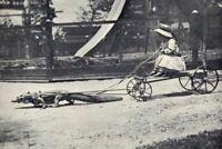 Antique Crocodile Carriage Photo 764 Oddleys Strange & Bizarre