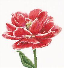 Thea Gouverneur 520A Aida Rosso white doppi Tulipano