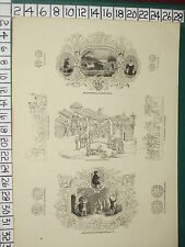 1845 Stampa ~ SAXON emblemi moneta argentea RAME styca SAXON noblemen PENNY COIN