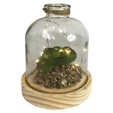 LED Deko Glas Flasche mit Holzboden mit Sukkulente Batterie Ø12,5x H17,5cm