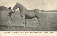 The Hairless Wonder - Horse Blue Bell - Philadelphia c1905 UDB Postcard