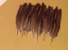 30 french partridge wing feathers