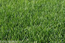 """Scotts Kentucky Blue Grass """"Classic"""" 6 Lbs"""