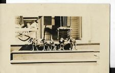 real photo postcard from nebraska showing  bloodhound puppies on a porch 1911