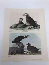 John James Audubon Folio Plate 28/29 Tufted Puffin Surf Scoter Limited 750