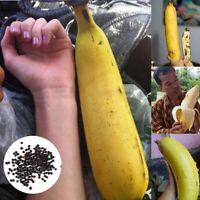 50Stk Selten Riese Obst Samen Bananenstaude Banane Samen Zuhause Garten Pflanzen