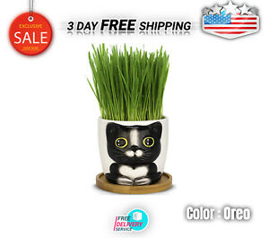 Window Garden Cat Grass Growing Kit With Kitty Pot Planter Perfect For Cat NEW