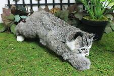 Gray Bob Cat Stalking Realistic Furry Animal Taxidermy Figurine Replica Bobcat